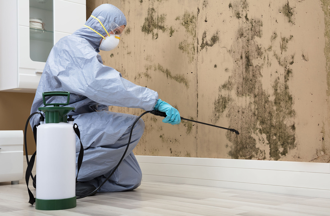 best mold removal companies near me